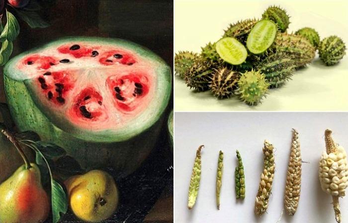 Как выглядели фрукты и овощи до того, как их коснулась рука человека