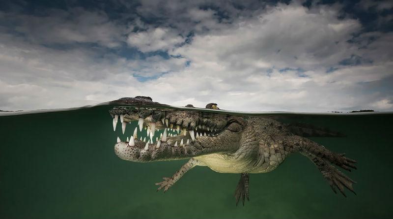 Между двух миров: на этих полуподводных фото видно, что ждет вас за ширмой водной глади