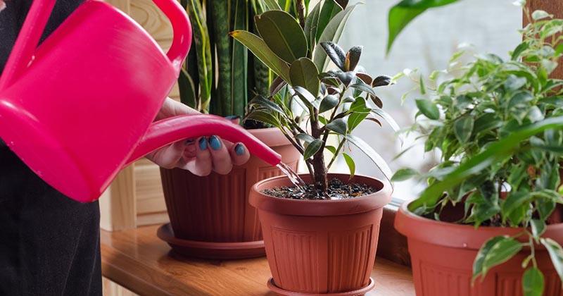 Простое аптечное средство способно вернуть растения к жизни
