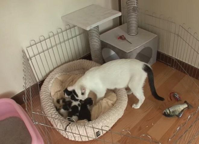 Кошка, которую увезли в приют, нашла дом и вернулась туда через год, но уже не одна