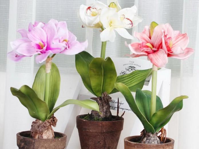 Хотите, чтобы комнатные цветы цвели долго и пышно? Тогда вам нужно пользоваться этой маленькой хитростью