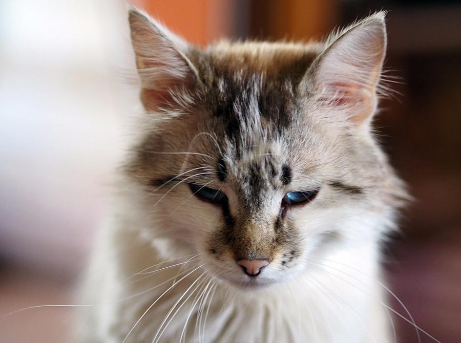 Кошачье горе