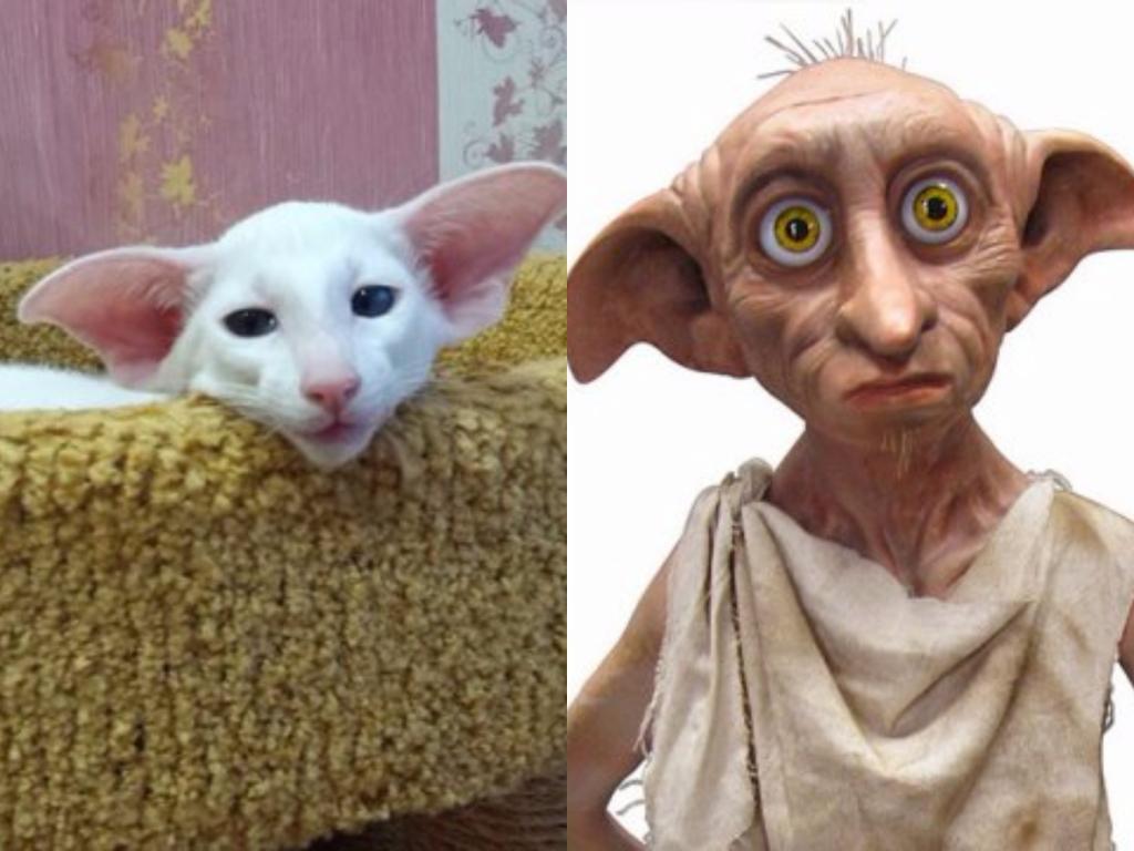 Коты, похожие на людей и киногероев: забавные фото интересное
