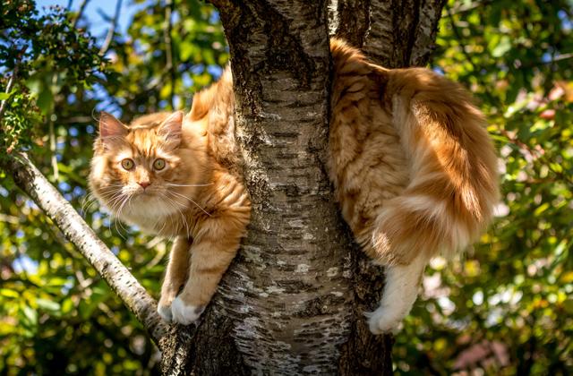 Почему говорят, что у кошки девять жизней?