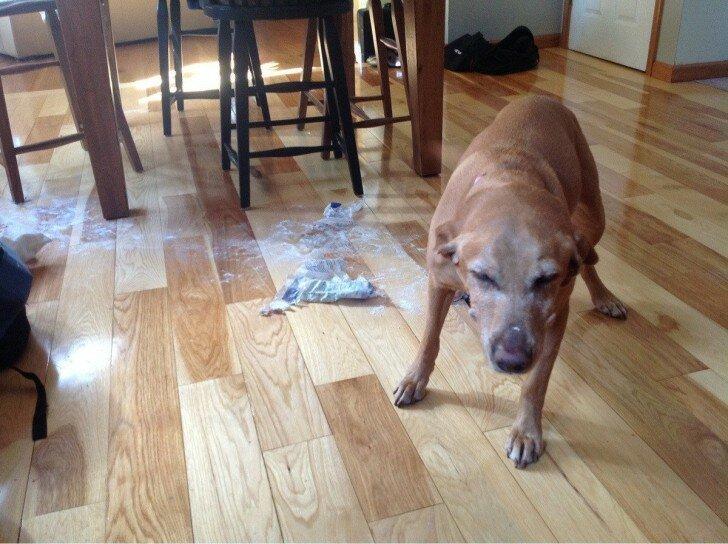 Собака Баскервилей? врасплох, кошки, смешные, собаки, фото, шкодники