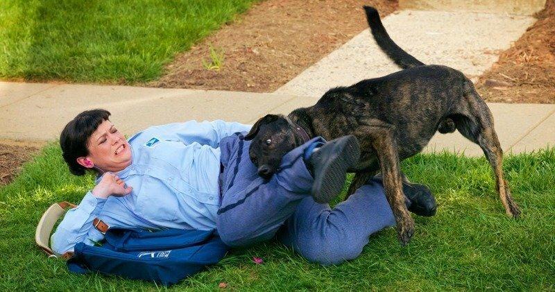 Eсли на вас напала собака информация., люди, опыт