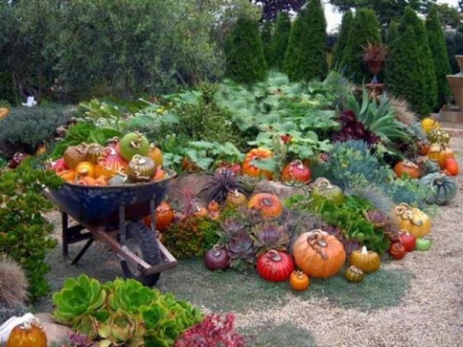 зеленое+удобрение+ урожай+фото
