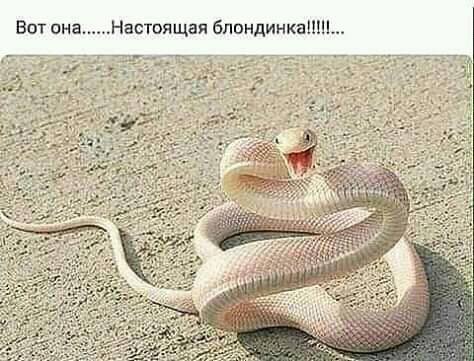 Я, Кулакова Мария Петровна, решила присоединиться к санкциям против стран Запада... Весёлые,прикольные и забавные фотки и картинки,А так же анекдоты и приятное общение