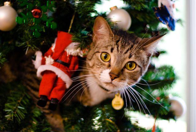 Енот и кот наряжают новогоднюю елку (видео)