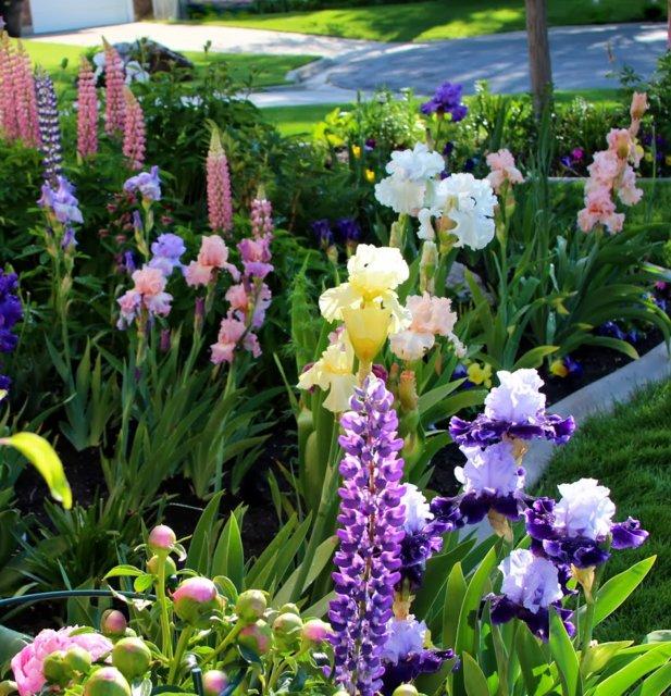 Клумбы из многолетников - таблицы цветения. Как сохранить комнатные цветы, уезжая в отпуск!