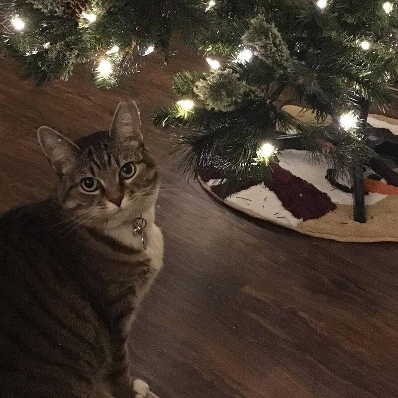 Минни, как и многие кошки, любит забираться на ёлку инструкция, кот, подарок, прикол, рисунок, художник, юмор