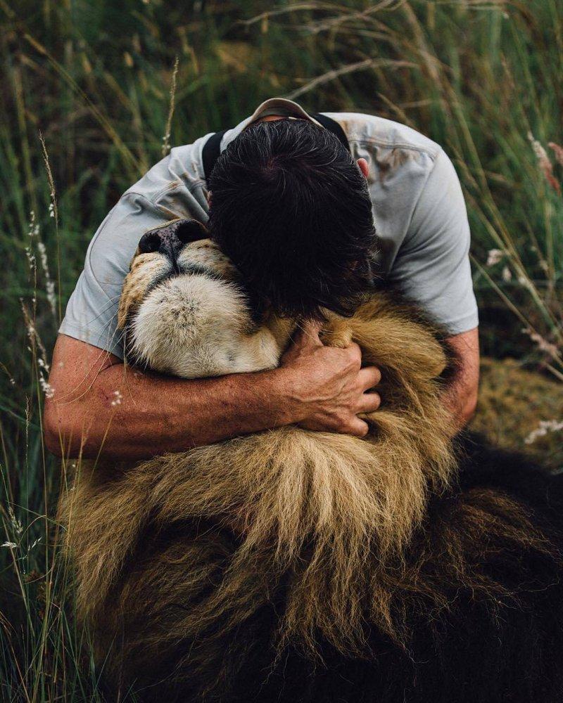20 трогательных и смешных фото, которые доказывают, что животные любят нас кот, кошка, лев, любовь, смешно, собака, человек