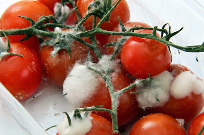 Пропавшие продукты одна из первых причин появления неприятного запаха