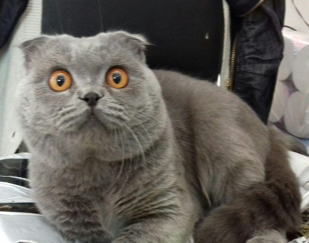 """Волонтерские истории Сообщества """"Будка"""". Первый раз видела, как кот плакал."""