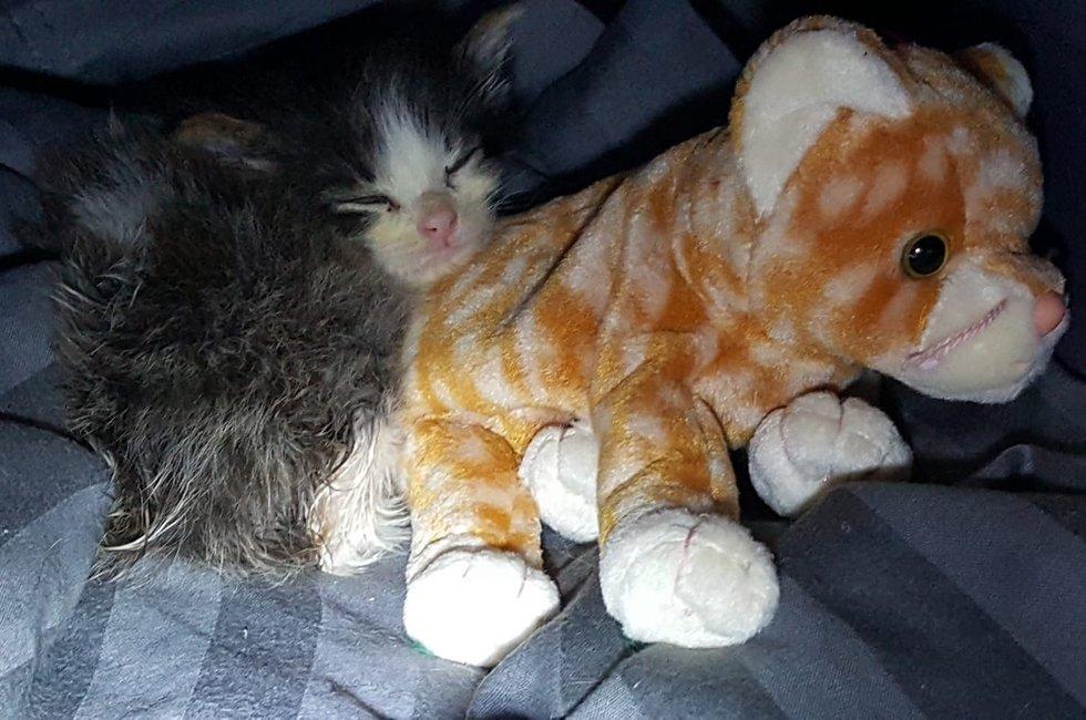 котенок с плюшевой игрушкой