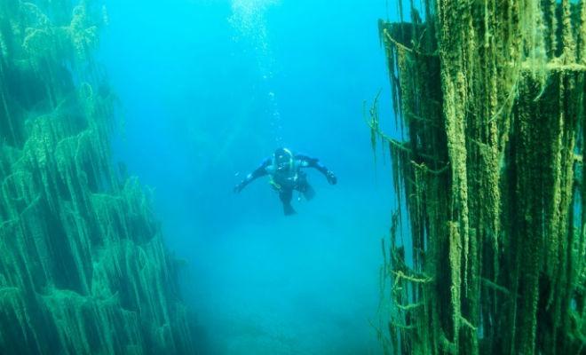 Лес растет под водой: погружение в горах Тянь-Шань горное озеро,озеро Каинды,погружение в подводный лес,подводный лес,Пространство