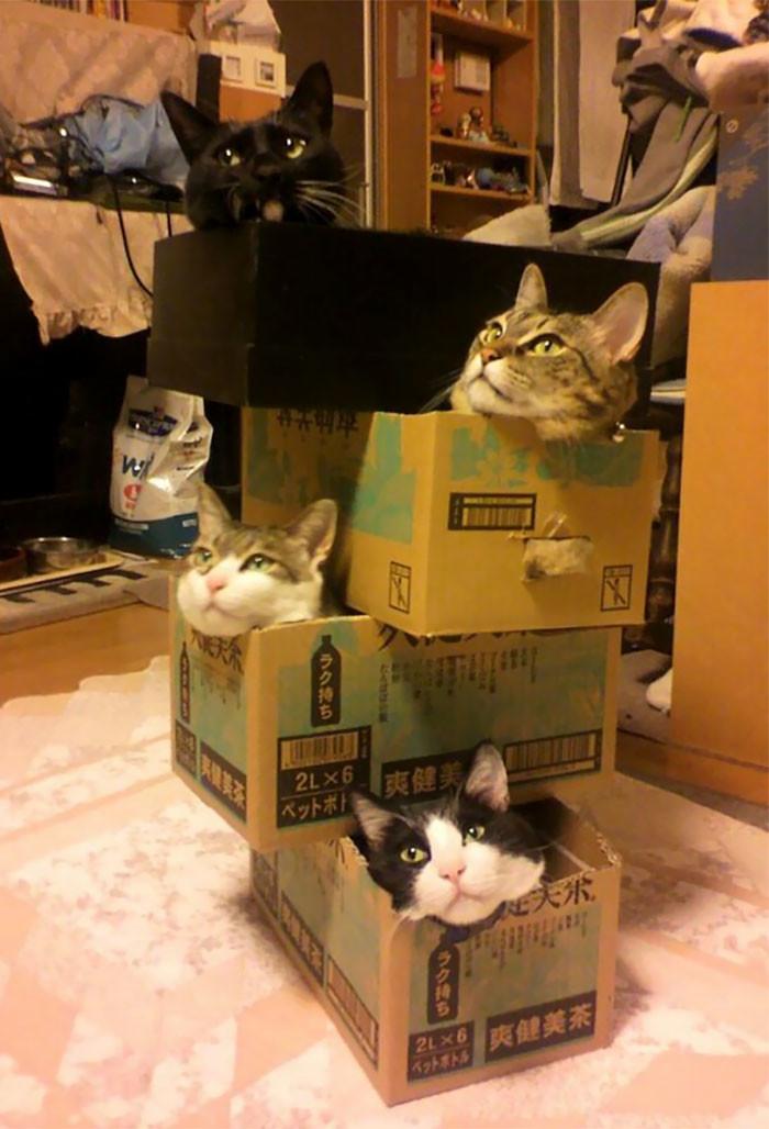 Вездесущие и всепроникающие кошки!