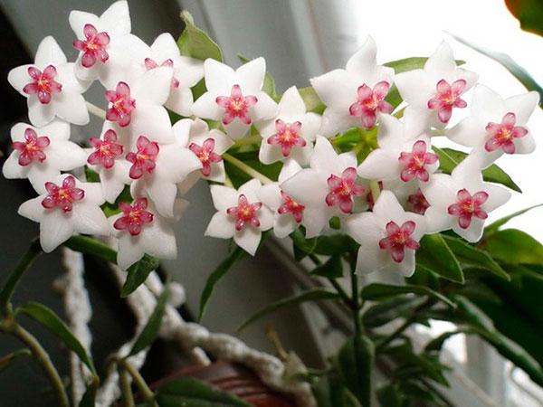 10 растений, которые приносят в дом семейное счастье