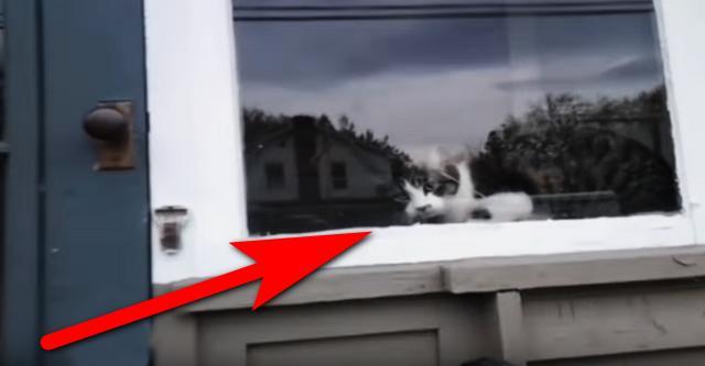 Хозяева не верили жалобам почтальона на их кота. Не верили до тех пор, пока не посмотрели это видео!