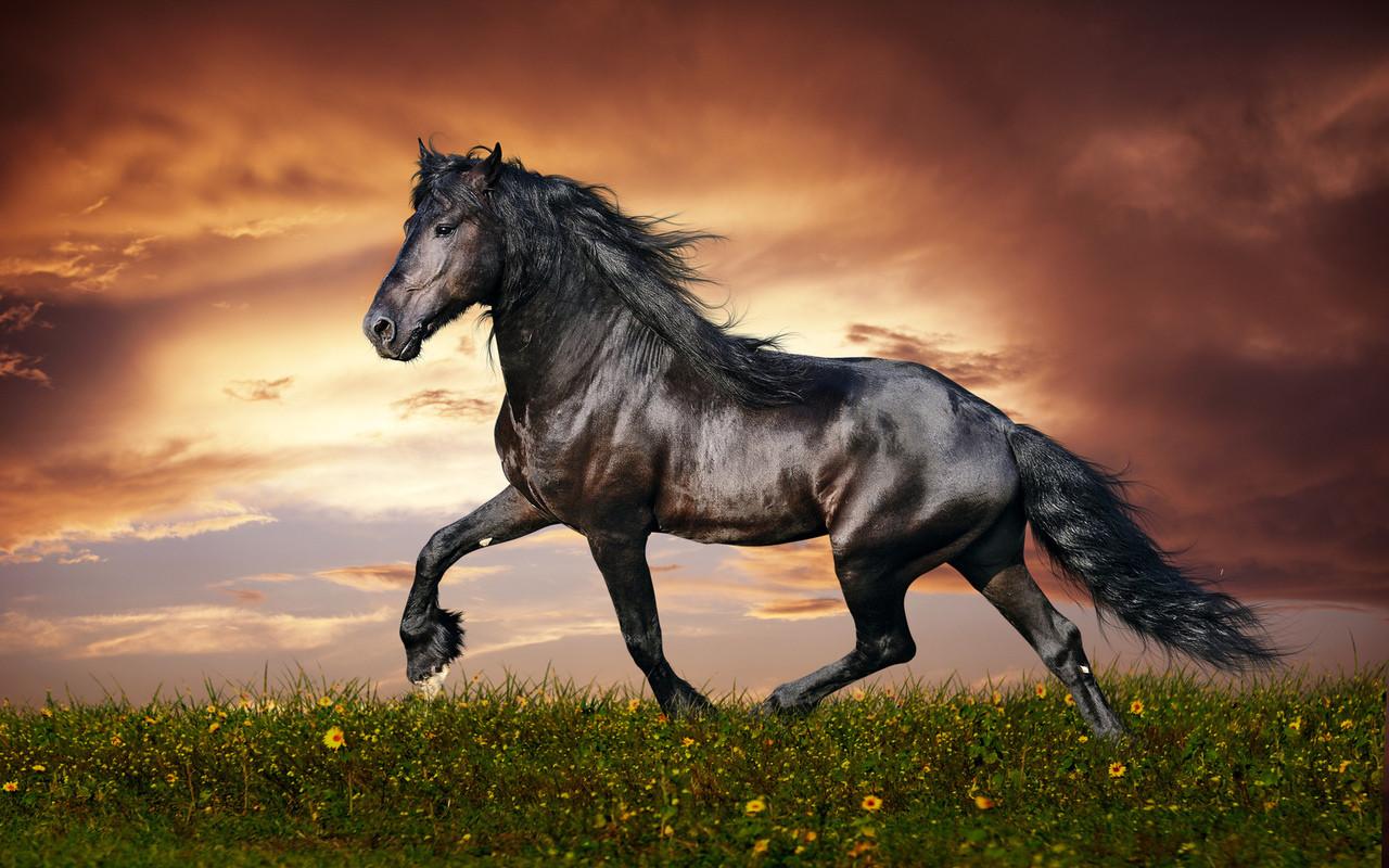 Пасутся кони на лугу, красивые, как в сказке!