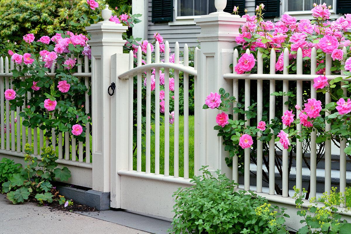 Красивый забор для загородного дома. Идеи и материалы заборы, забор, заборов, более, загородного, можно, требуют, изгороди, посторонних, хорошо, кустарники, гравия, дерева, использованием, плетень, растения, подойдут, досок, штакетник, решение