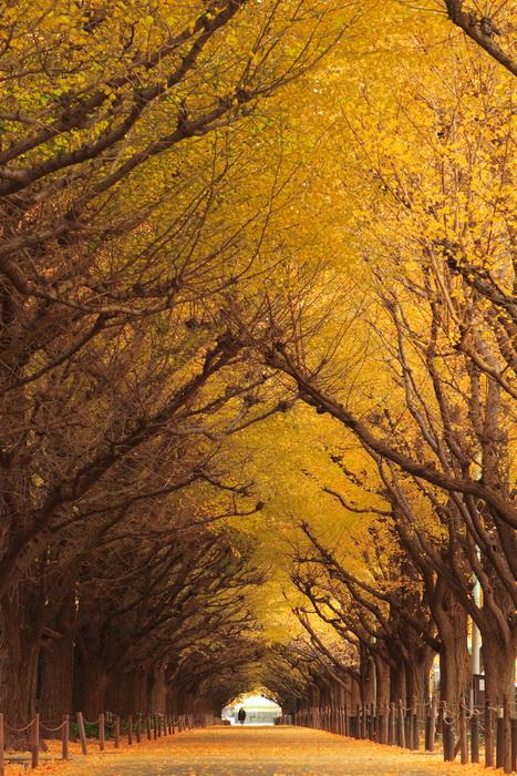 Тоннель из деревьев. Токио. Осенний вид.