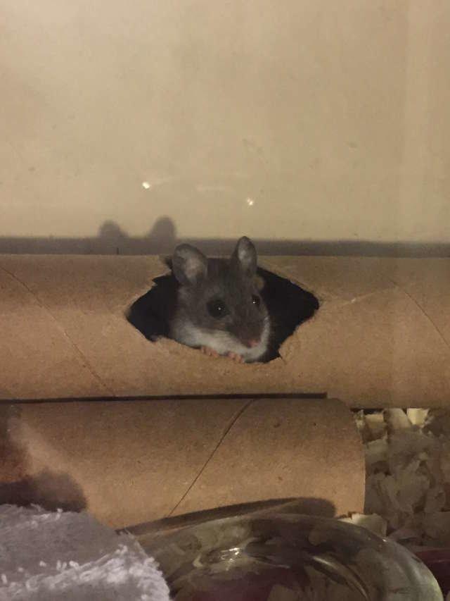 Мышь росла, крепла и становилась ручной в мире, добро, животные, люди, мышка, спасение