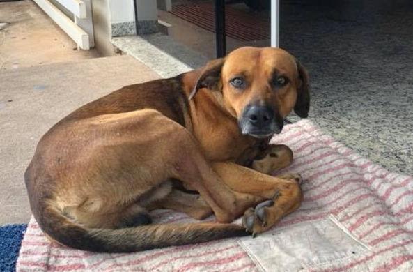 Верный пес четыре месяца ждет хозяина у дверей больницы