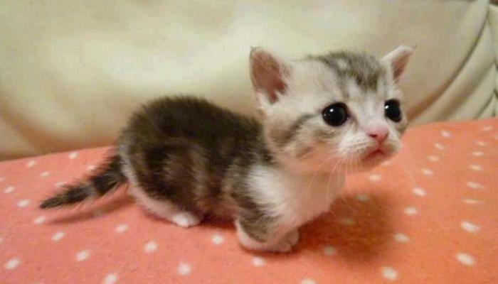 21 причина, почему кошки пор…