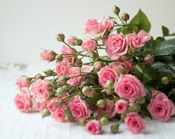 Объект, кустовые розы картинки с днем рождения
