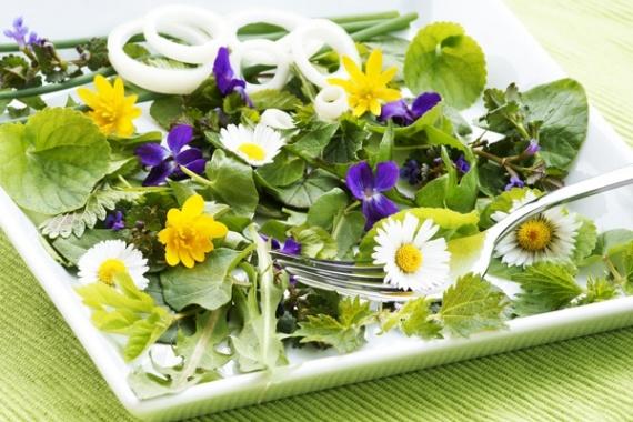 Пожалуйста, ешьте одуванчики – или несколько съедобных садовых сорняков
