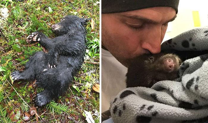 Фотограф спас умирающего медвежонка, рискуя попасть за это в тюрьму