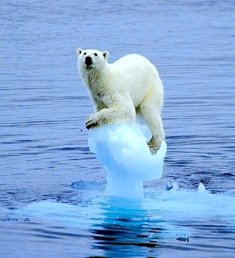 Всемирное потепление??? Быть или не быть…