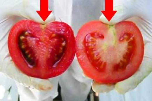 Как выбрать натуральные помидоры