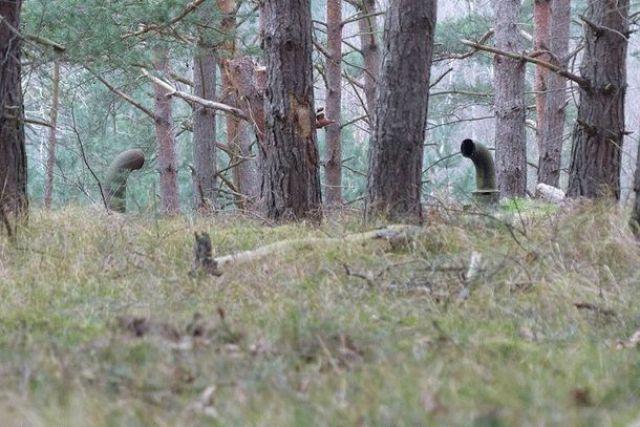 Мужчины обнаружили непонятную дверь в лесу.