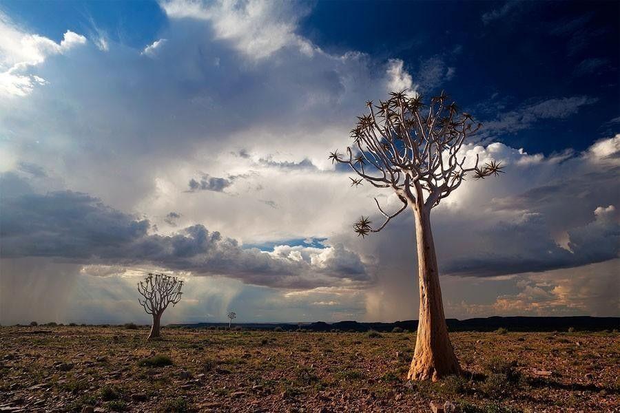 Фантастические пейзажи Намибии намибия,пустыня,фото