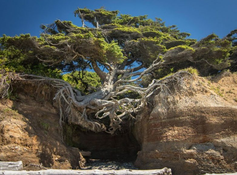 Жажда жизни: деревья, растущ…