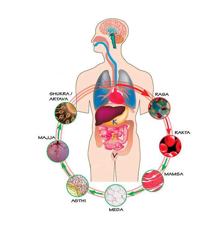 Аюрведа: сочетаем продукты правильно здоровье,питание,полезные продукты,желудочно-кишечный тракт,пищеварение,раздельное питание