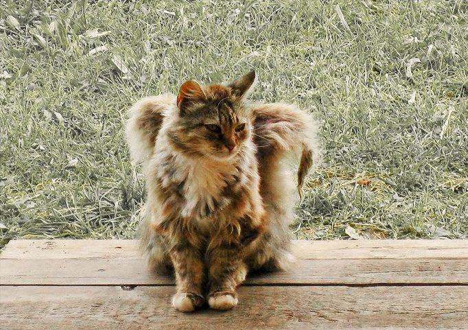 Где можно сделать кошачьи ушки на фото дочка