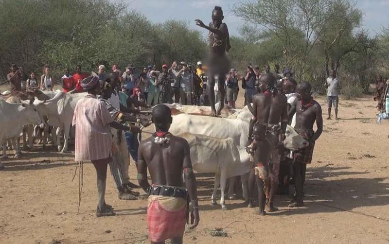 1. Хамар - прыжки через быков мир, ритуал, странность