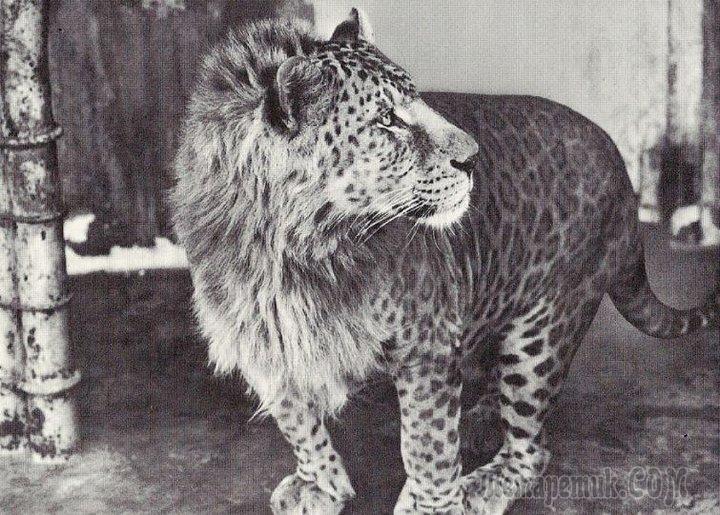 Человеческие эксперименты: невероятные гибриды животных