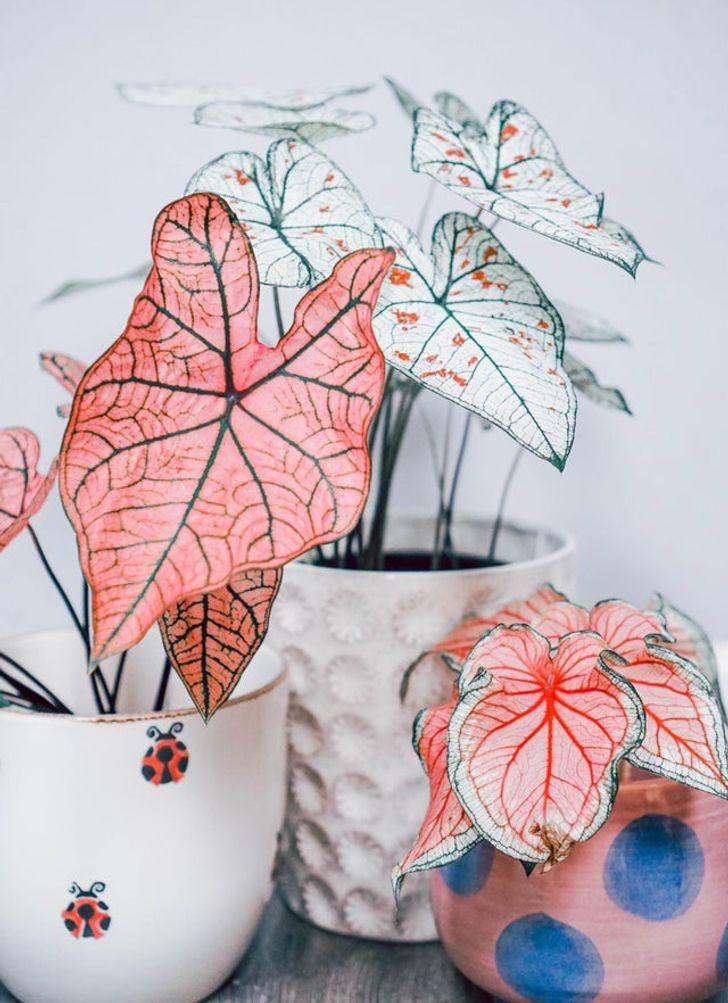 19 растений, которых хлебом не корми, дай выпендриться интересное,комнатные растения,растения,цветоводство