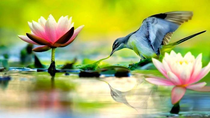 Красивые фотографии