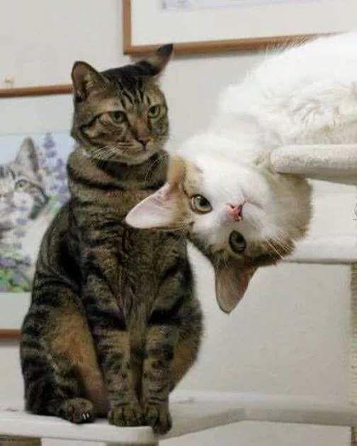 Забавные котики, любопытство которых зашкаливает!