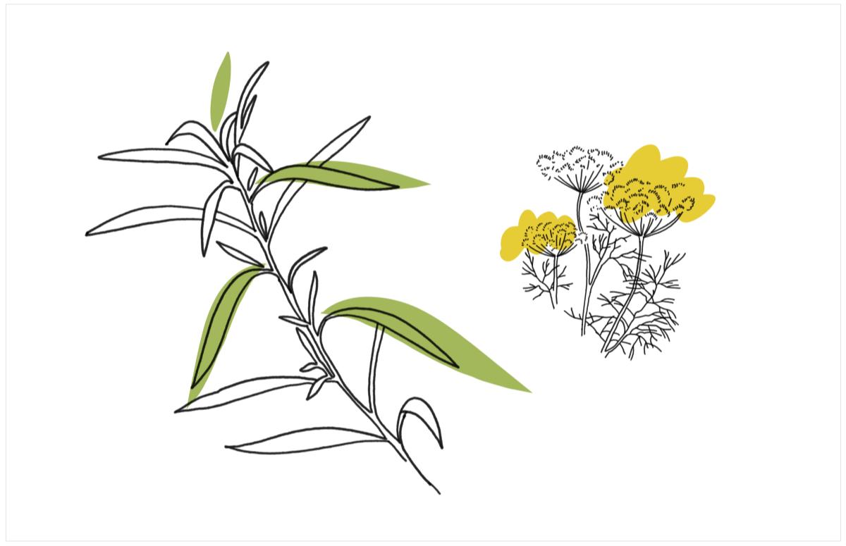 От лука до розмарина: 10 полезных и вкусных трав здоровье,питание