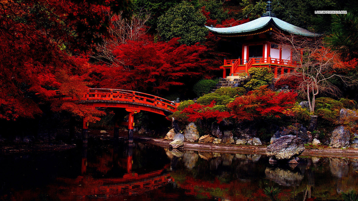 autumn-in-the-japanese-garden-6187-1366x768 (800x493, 501Kb)