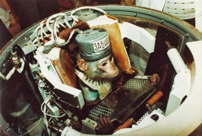 Военно-космические макаки