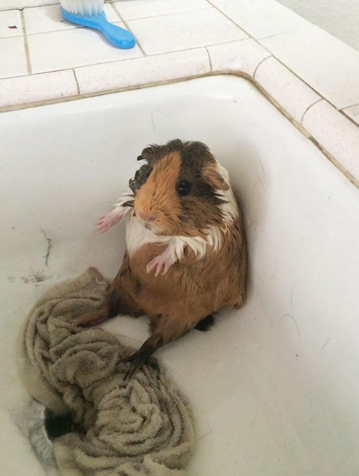 Даже не знаю, что сказать... банный день, ванна, животные, купание, шок