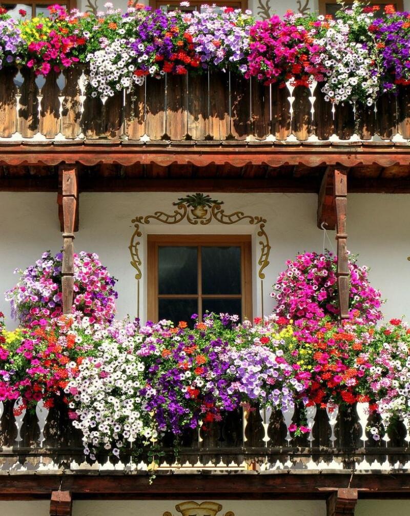 картинки цветочного домашних сентябре