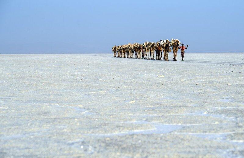 Верблюжий караван, перевозящий мешки соли через соляную равнину. Фото: Карл Корт (Carl Court: Getty) безжизненное место, вулканы, интересное, фотографии